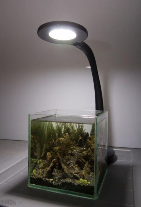 pico aquarium