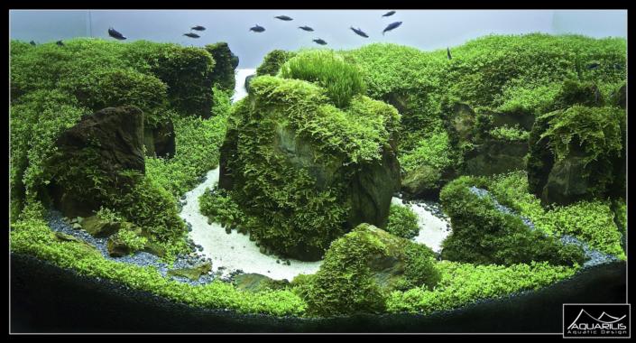 Aquarium DImrill Dale