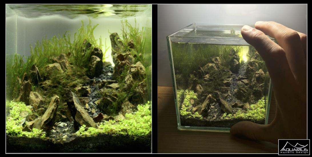 cube pico aquarium