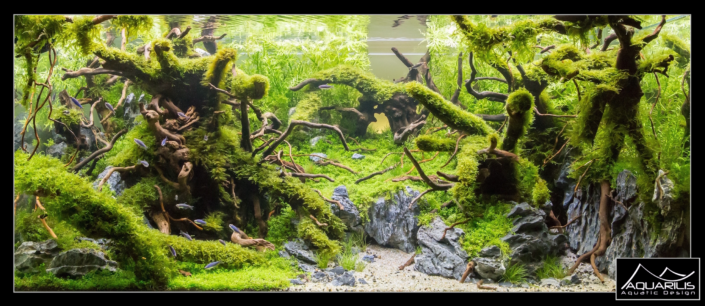 Aquarium Ents