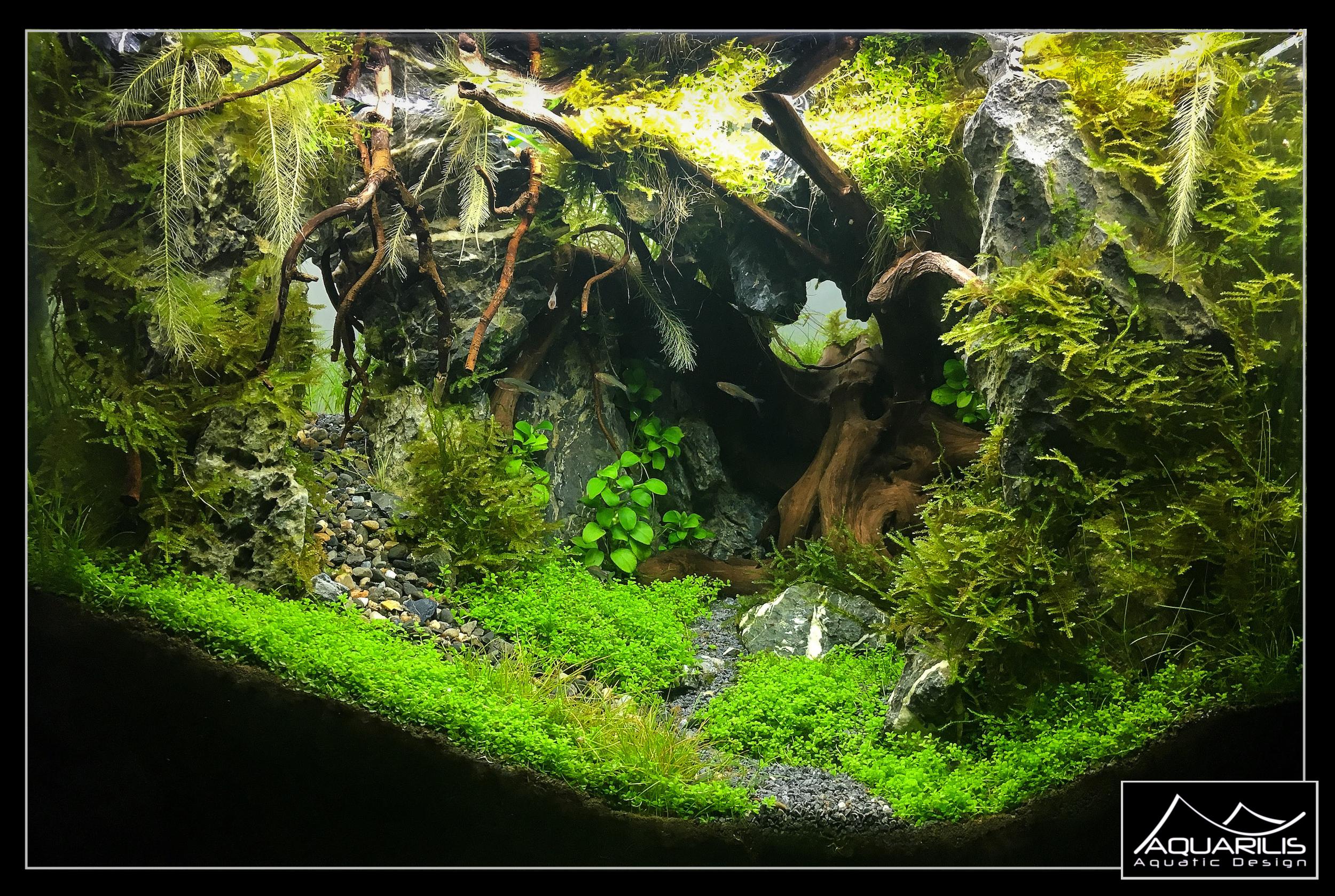 Aquarium polypheme