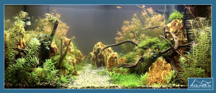 Aquarium automne