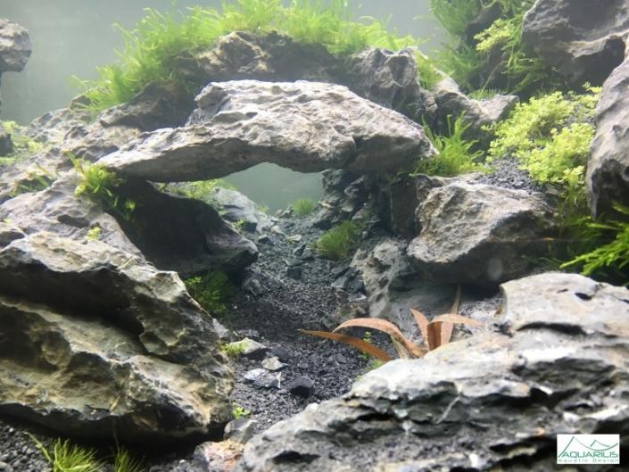 detail aquarium