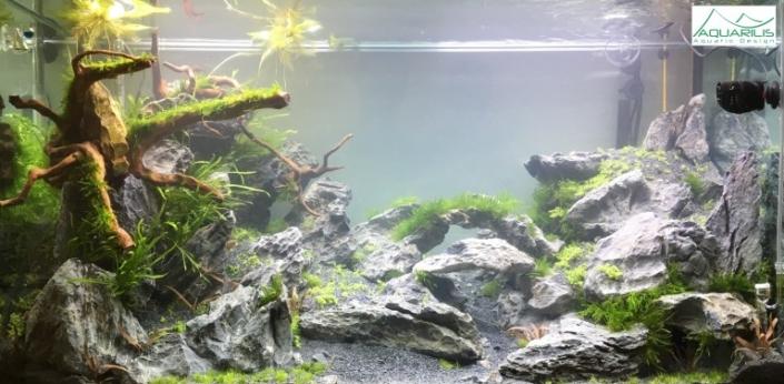 décor réalisé dans aquarium