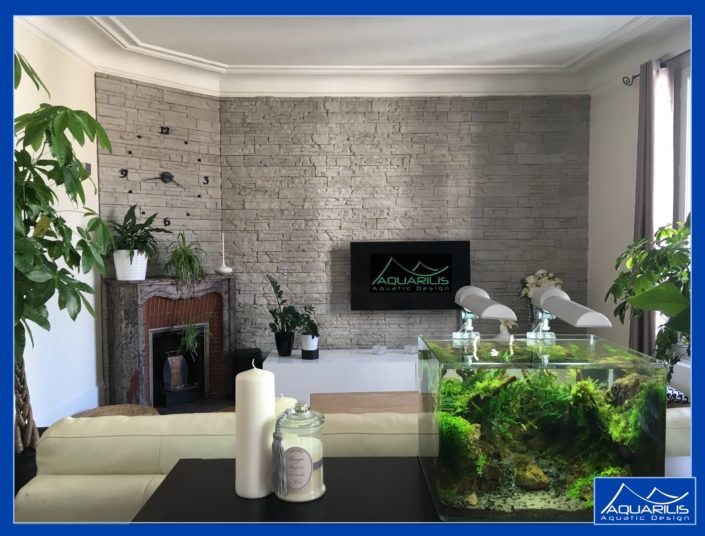 aquarium interieur vegetal