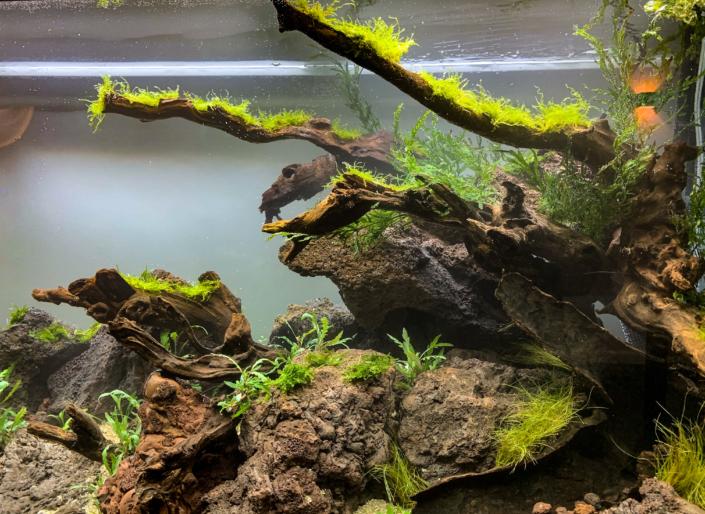 racines river wood
