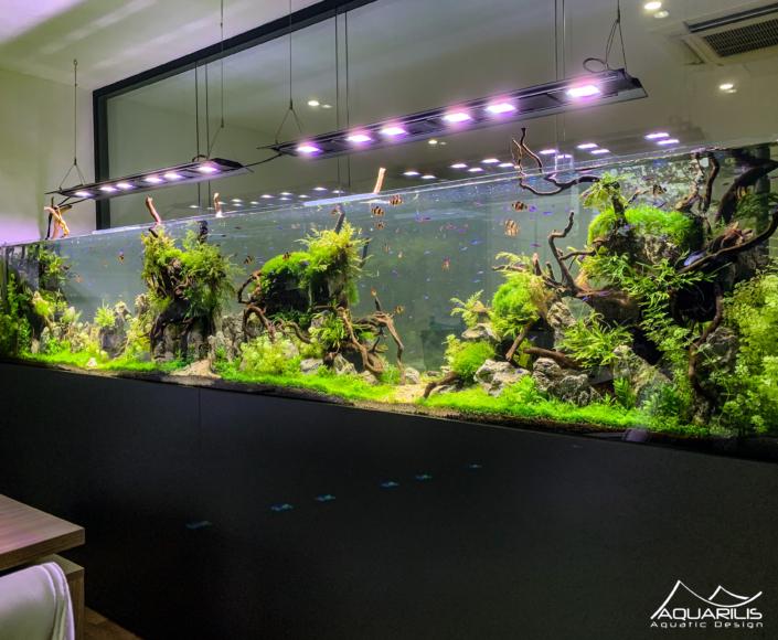 Aquarium face principale