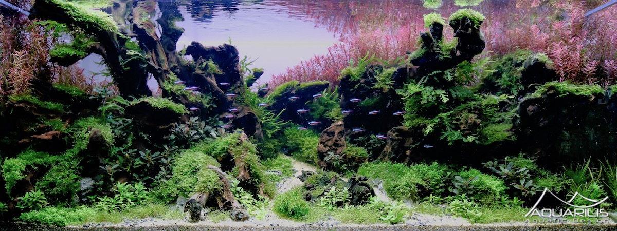 aquascape Laurent Garcia