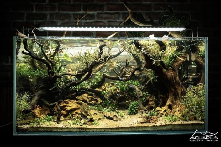 architecte aquarium