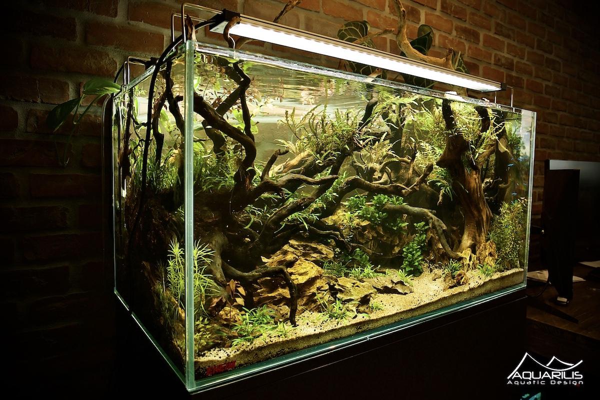 aquaponie aquarium