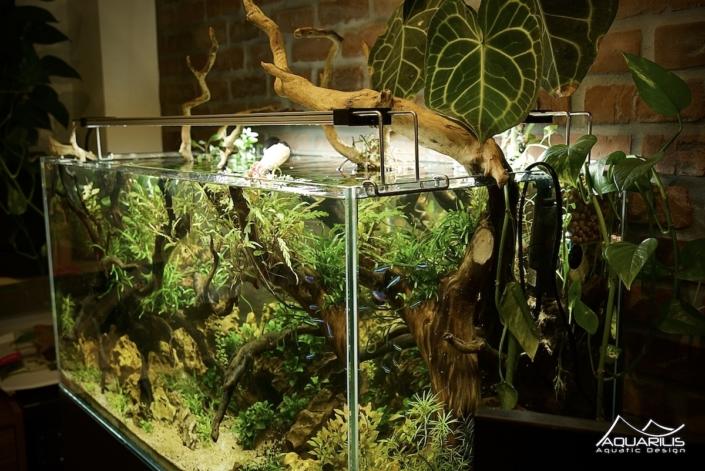 hydroculture aquarium