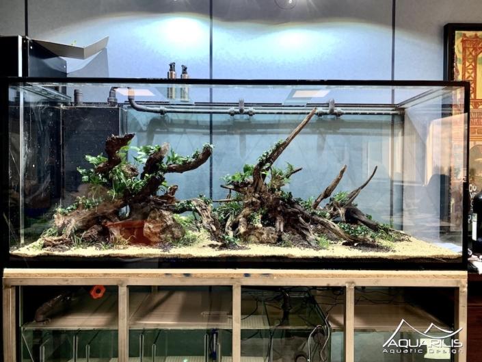 hardscape nature aquarium