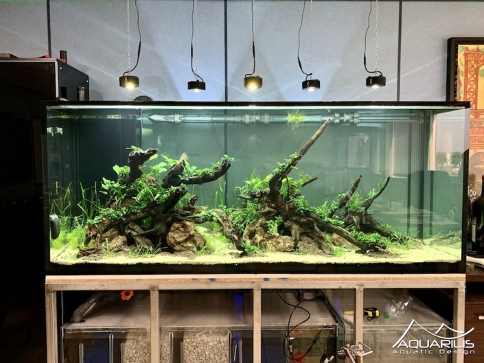 aquascape nature aquarium