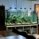 aquarium nature geante
