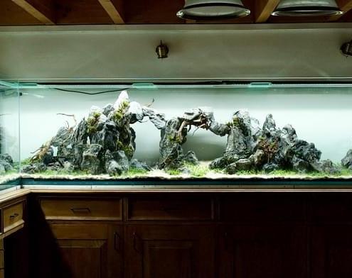 aquarium design aquarilis